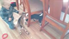 养了两只小山羊,宝宝居然开心的跟它们玩耍,