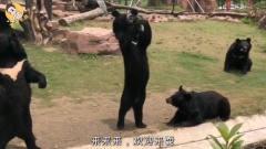 搞笑动物配音,当动物会说重庆话第十二期