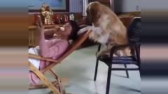 搞笑视频精选君:当个狗不容易啊,啥都要会!