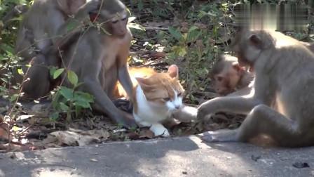 搞笑动物:贪嘴的猴子盯上螃蟹,没想到竟被螃