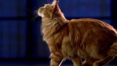 搞笑动物:为什么能猫咪轻松跳到2米高的地方?