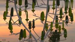 """奇闻趣事:50岁工程师发明""""风树"""",有风便能自"""
