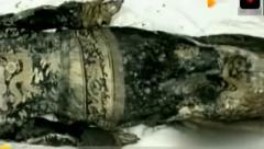 古墓挖出韦小宝原型,身上离奇谜团让考古专家
