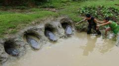 牛人用四个泥坑捕了4条大鱼,网友:今天的晚餐