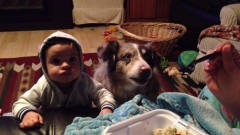 主人教宝宝说话,没想到一旁狗狗先学会了,镜