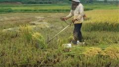 越南牛人自制割米机,网友喊话:干完活赶紧把