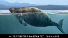 世上灭绝最快的动物,人类偶然发现就疯狂捕杀