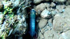 巴厘岛钓鱼潜水探索海底世界,发现漂亮的七彩
