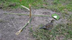 牛人自制捕鸟神器!几根竹子,一双巧手,收获