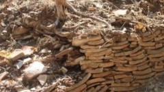 堆填区里的考古学:真实的生活痕迹