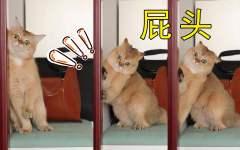 家里猫不满被无视,角落里疯狂给自己加戏