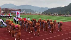 运动会开幕式出现一群网红熊!和姐姐们跳的串