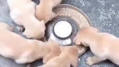 搞笑视频精选君:吃货的世界我们不懂!
