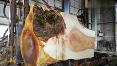 牛人把一截百年七叶树,锯子一锯,网友:里面
