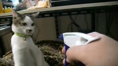 主人用喷壶给猫咪喷水,猫咪对主人又打又咬,