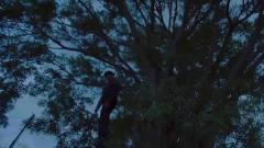 十二传说:老榕树背后的传说,男子被离奇砍伤
