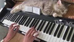 音乐家的猫也是有修养的,睡觉都要音乐的熏陶