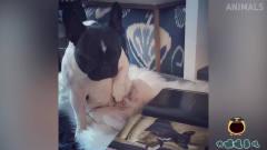 搞笑动物集锦:这只狗穿上鞋之后,走路已经变