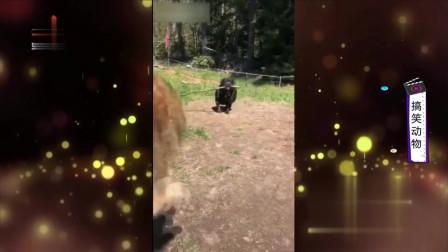 """家庭幽默录像:搞笑动物联盟,狗拿""""打狗棒"""""""