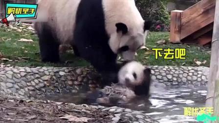 搞笑动物配音:熊猫妈妈实力坑娃,拿着儿子就
