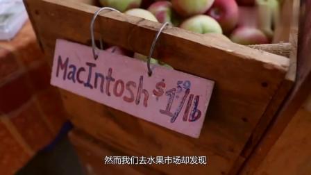 奇闻趣事今年水果价格都已经下降,为何苹果却