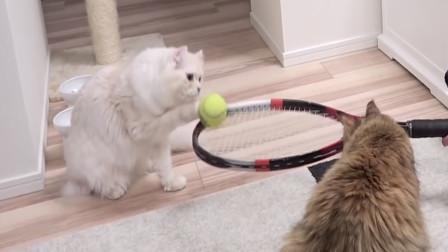 搞笑动物:这年头,连猫都会打球了?