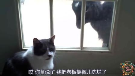 搞笑动物配音:如果动物会说四川话,笑得牙巴