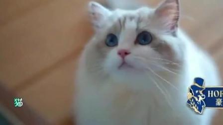 家庭幽默录像:搞笑动物,原来动物搞笑起来也