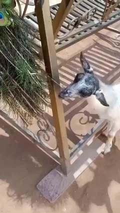 孔雀:盆友,眼睛不需要可以捐给有需要的羊