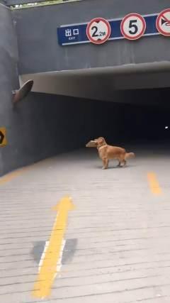 狗:我居然我居然居然是条狗....cr:网络