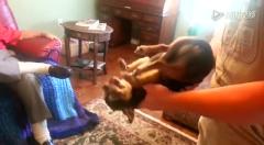陌生人一抱就装死的狗狗 搞笑视频