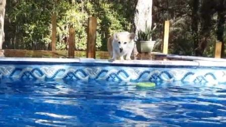 搞笑动物:来来来,一起游个泳!