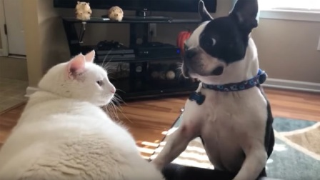 搞笑动物:确认过眼神,你就是我要打的狗!