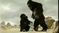 创意广告:泰国广告之猩猿崛起,就问你服不服