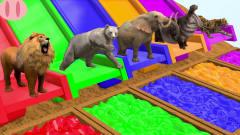 超搞笑!5种动物为何被困住了?滑下滑梯后竟然