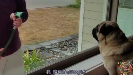 搞笑动物配音:如果狗狗会说四川话系列,让人