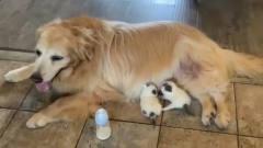 搞笑视频:今天猫妈妈不在家,就来狗妈妈这找