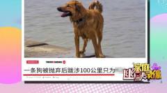 家庭幽默录像:狗狗被丢弃后跋涉100公里,只为