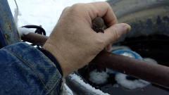 小鸟原本站在栏杆上看风景,结果被冻住,画面