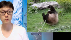 熊猫也有黑科技,功夫熊猫变身!搞笑视频精选