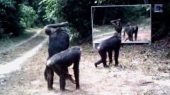动物照镜子的各种搞笑滑稽反应