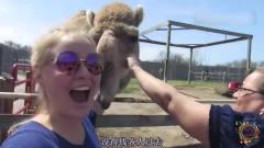 搞笑动物配音:如果动物会说四川话系列,能把