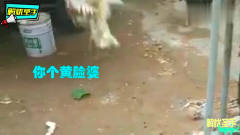 搞笑动物配音:动物界也有出轨小三?谁配的音