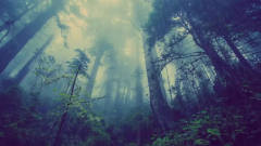 魅力新世纪音乐 Forest Rain