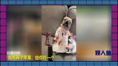 娱人鱼-20180209-比春节还美好的糗事!