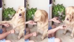 搞笑视频集锦:我只是只小狗狗,为什么你要套