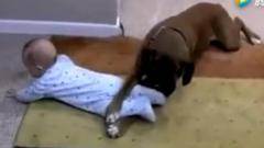 宝宝搞笑视频合集,狗狗用前爪压住宝宝不让出