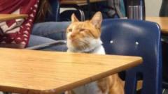 【每日一囧合辑】上课认真猫VS上课不认真猫,要