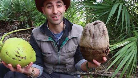 椰子营养很丰富,老外为了早餐,竟开启了椰子