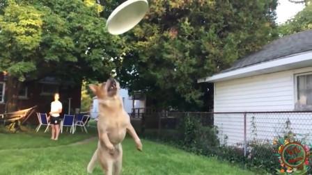 搞笑动物配音:你快去把盘子接到,不行不行,你快把我先接到
